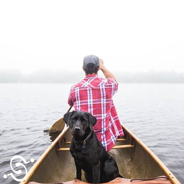 seguros de hogar mascotas